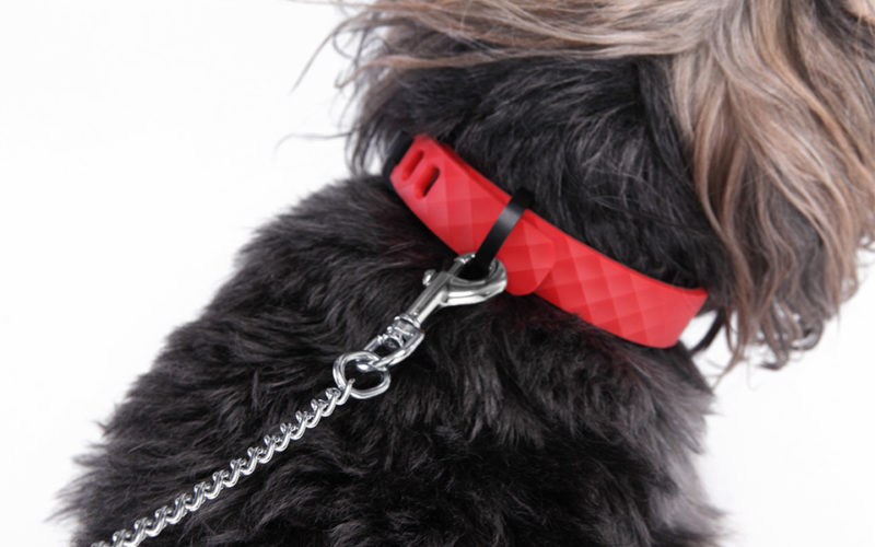 KYON PET TRACKER COLLAR. BEST NEW TECHNOLOGY FOR TRACKING PET IF LOST